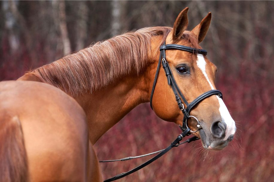 CBD Products for Horses