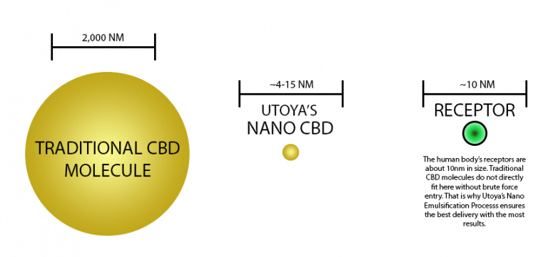 Difference Between Utoya CBD and Other CBD Molecules