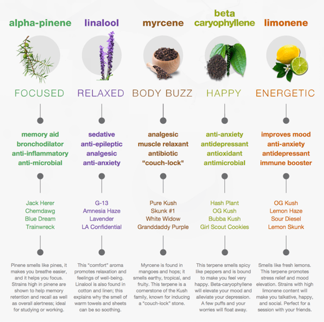 Terpenes And Cannabis Strains Infographic Chart