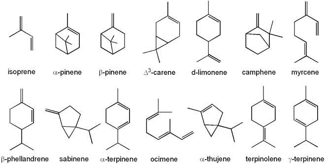 Terpene Structures Visual Chart