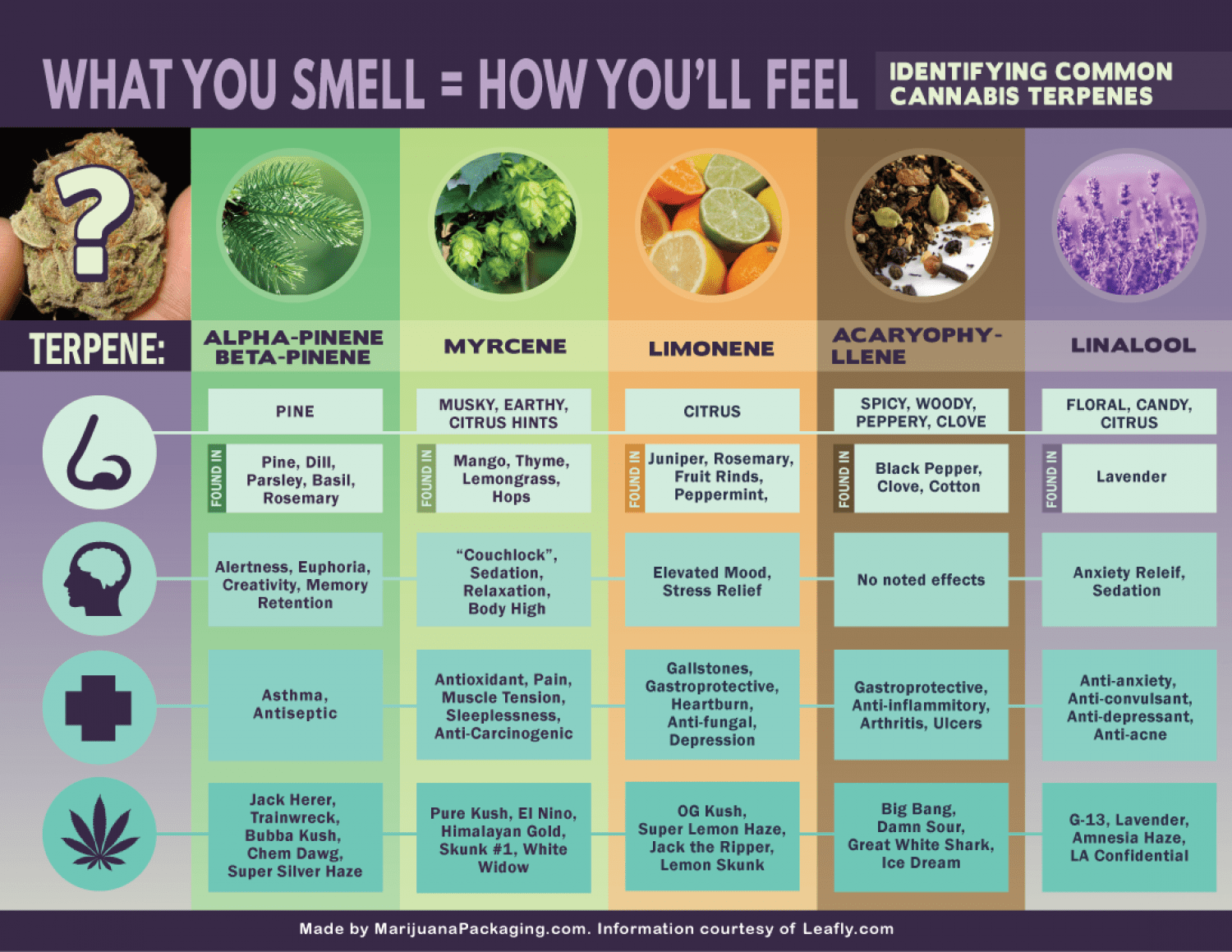 Terpene Smells And What They Mean Infographic