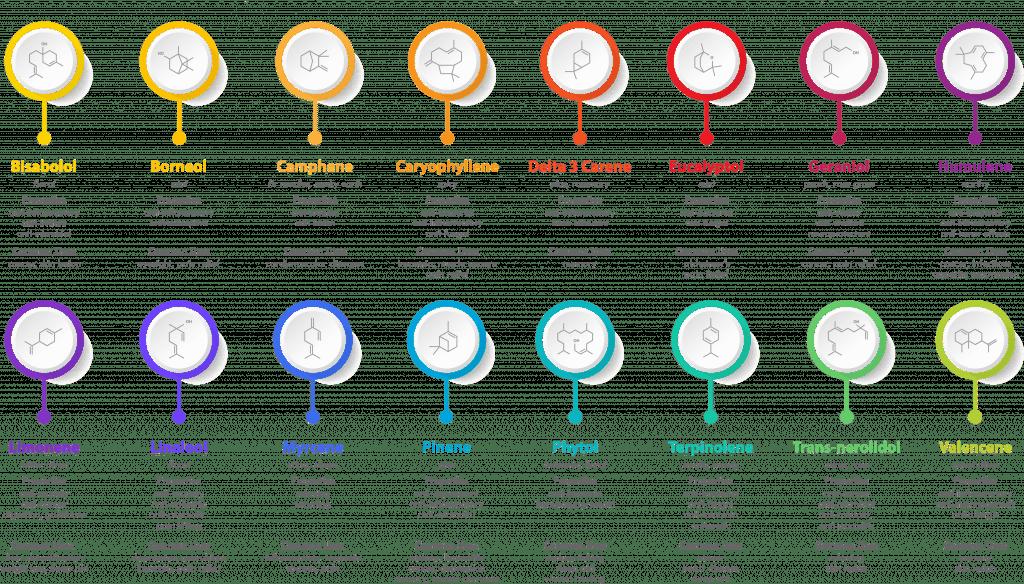 Terpene Effect Chart - How Terpenes Work - Hemp Terpenes
